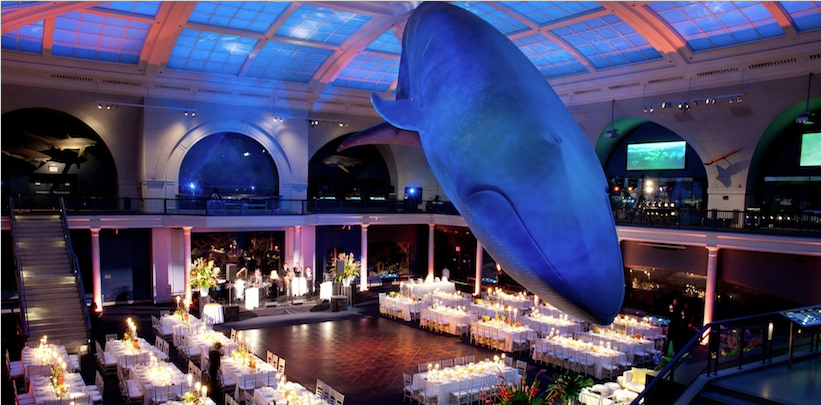 Museum wedding venues theres no short supply in nyc gruber photograph of the american museum of natural history junglespirit Choice Image